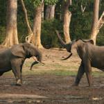 Actually Happening 70: Elephant Land Rush